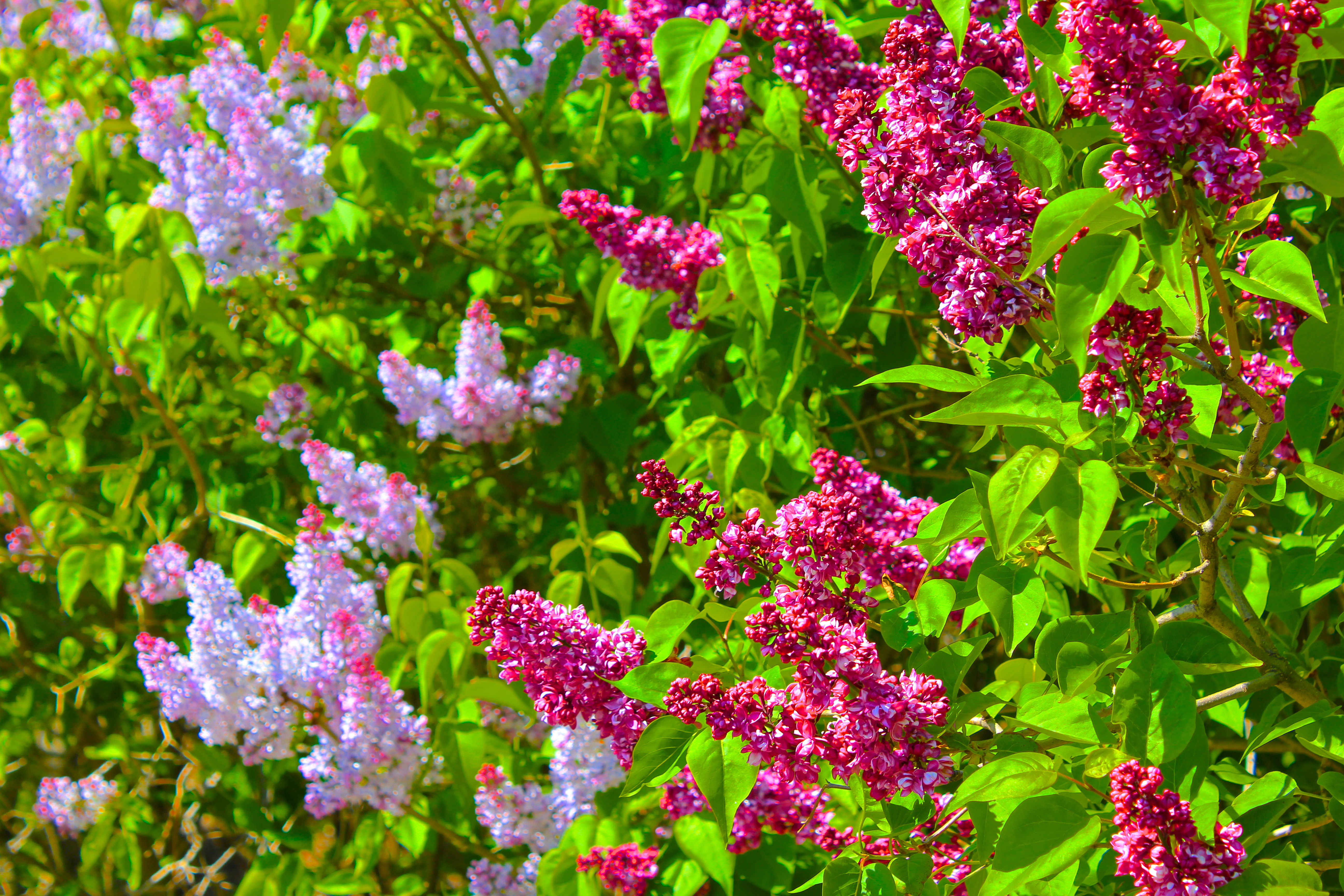 April Showers Bring May Flowers Tedi Sarah