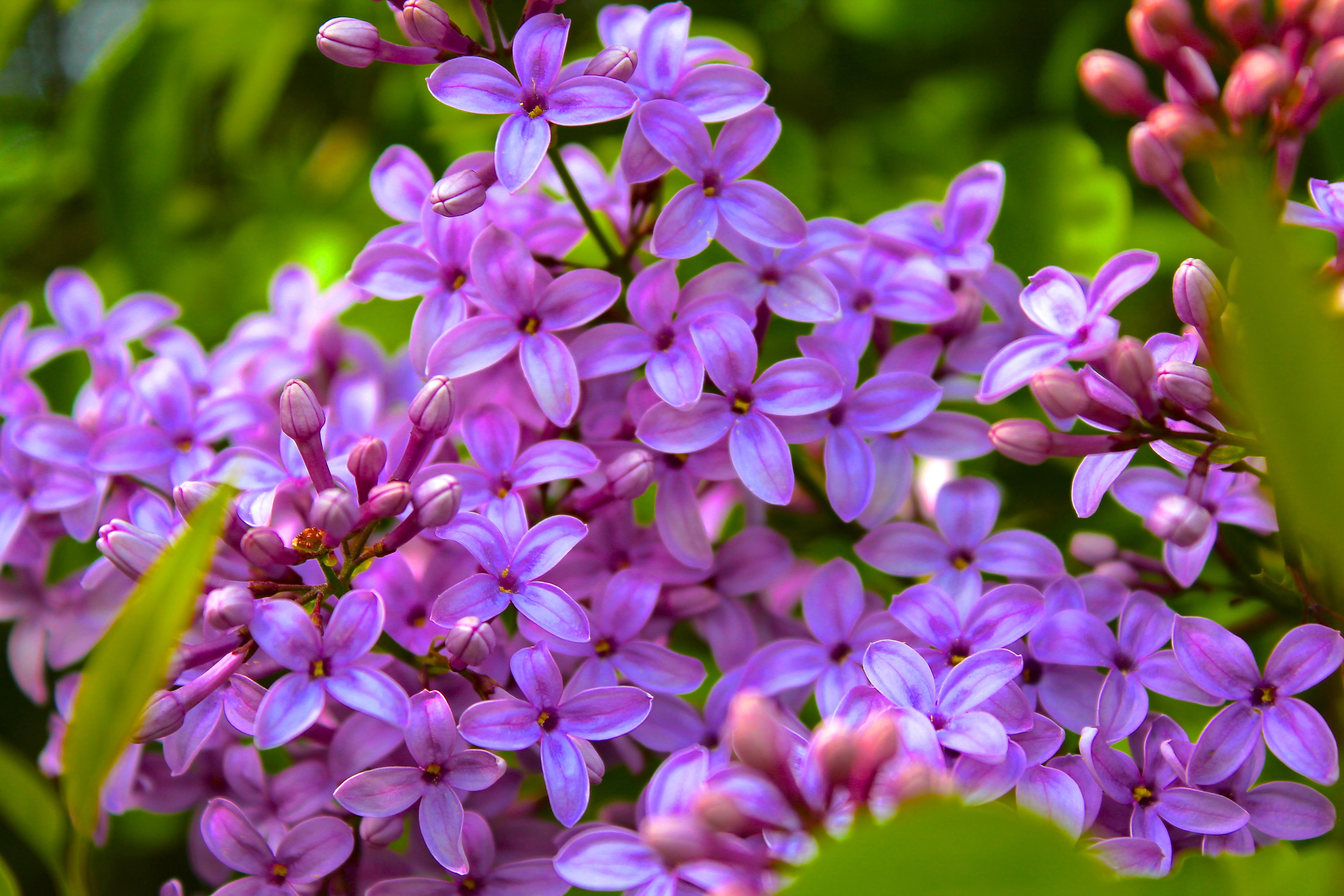 April Showers Bring May Flowers! – Tedi Sarah